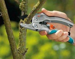 Letnie strzyżenie żywopłotów i krzewów