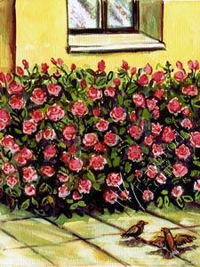 Róża Queen Elizabeth