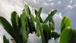 Pierwsze oznaki wiosny