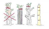 Ochrona drzew przed szkodnikami