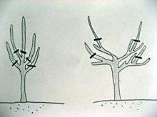 Przycinanie gałęzi oraz cięcie kształtujące koronę