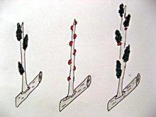 Rodzaje pędów brzoskwini